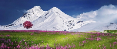 A green meadow with pink flowers and a tree in pink blossom. Aline of s now covered mountains in the background against a clear blue sky.