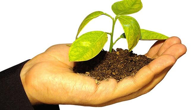 Open hand with a seedling growing out of a small mound of soil