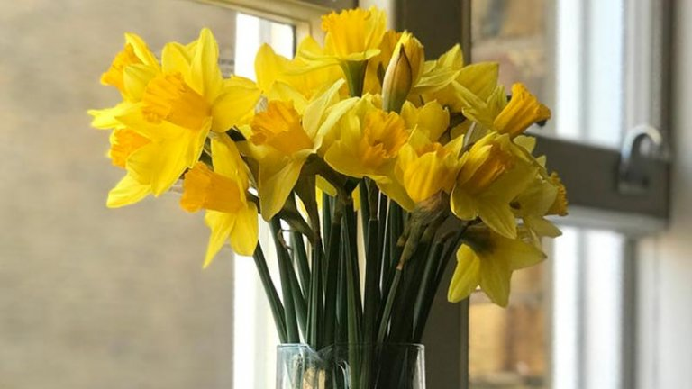 Bright yellow daffodils in a glass vase on a window sill