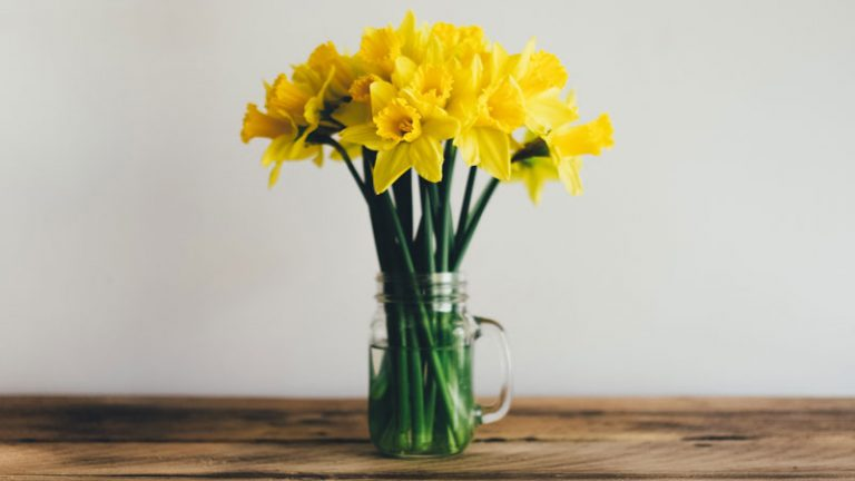 A bunch of daffodils in a jar of water